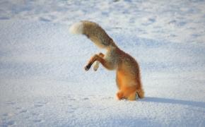 Dėl pirmojo sniego nuotraukų feisbuke