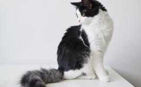 Ką reiškia turėti katiną?