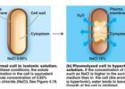 Kiti fizikiniai mikrobų augimo kontrolės metodai