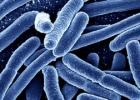 Mokslo naujienos: GMO testavimas