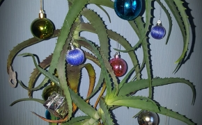 Kalėdos linksmai: sveikuoliška