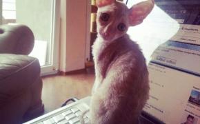 """""""Labas, aš – katinas. O tu kas?"""""""