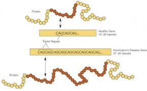Mutacijos