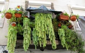 City gardening & street art in Portugal | Gatvės menas ir miesto sodai Portugalijoje