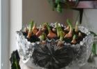 Pavasariška nuotaika namuose ir paprasti būdai jai sukurti