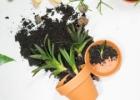 Kambarinės gėlės pavasarį. Kaip laistyti, tręšti ir persodinti?
