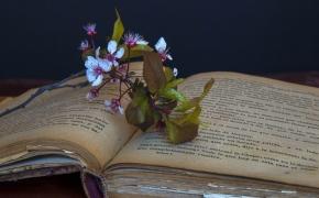 Geriausios rekomenduojamos knygos – 6 dalis