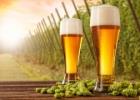 Mokslo naujienos: apynių skonio alus be apynių