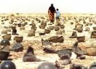 Cheminis Irako karas prieš Iraną