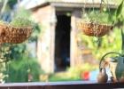 Augalų priežiūra vasarą. Ką daryti, kad augalai džiugintų iki rudens?