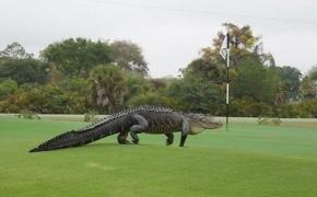 Plėšrūnas rinkoje – indikatorius Alligator