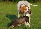 Kaip katė su šuniu