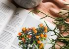 Kambarinių augalų energija. Knygos apžvalga ir patarimai
