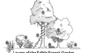 Sodai ir miško sodai