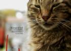 "Filmas: ""Stambulo katės"" / ""Kedi"""
