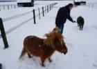 Alpakos vilioja turistus prie Šiaulių