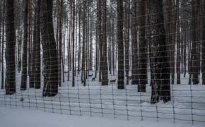 Žiemiškos asvejos svajos