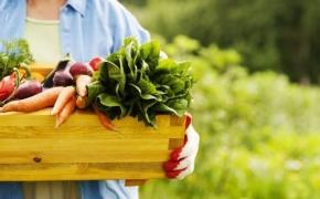 Gamtinės žemdirbystės seminarai liepos mėnesį visoje Lietuvoje