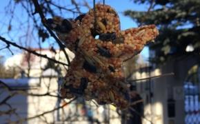 DARBELIS. Žiemos skanėstai pauksčiams