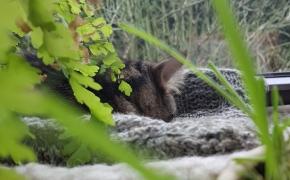 Hipoalerginių kačių nėra, bet sugyventi su jomis įmanoma