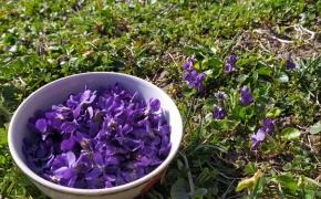 Violetinis cukrus