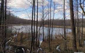 Paduobužės akmuo bei pasivaikščiojimas miško takais (Molėtų raj.)