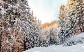 snieguose paskendęs Nesbo