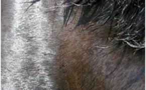 """11.47. Cormac McCarthy """"Laukinių arklių pakerėti"""""""
