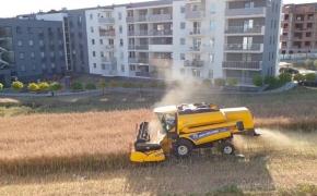 Užsispyręs ūkininkas ūkininkavimu užsiima vidury modernaus kvartalo