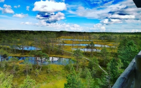 Viru pelkės pažintinis takas (3,5 km)  (Estija)