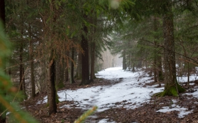 Jomantų miško pažintinis takas – daug temų ir visos apie gamtą