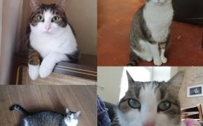 Ar mano katė klonuota?