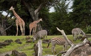 Ateities zoologijos sodas