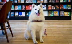 Kauno Vinco Kudirkos viešoji biblioteka kviečia vaikus į skaitymus su terapiniais šunimis