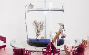 Žuvis valdanti plaktuką [video]