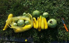 Mano vasara: galetės, daržai ir cukinijos